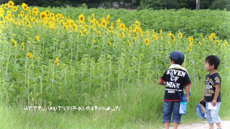 夏の日_b0324291_01490940.jpg