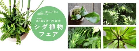 シダ植物フェアはじまりました_d0263815_1743916.jpg