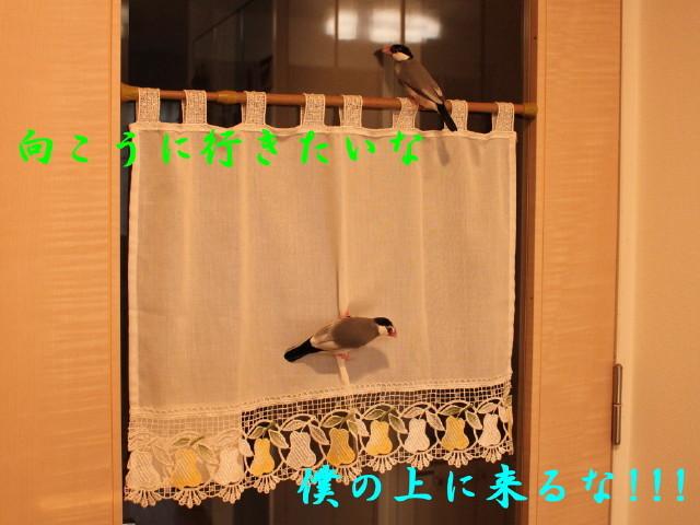 c0365734_22044245.jpg