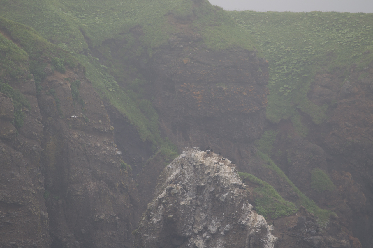 トウゾクカモメ フルマカモメ 北海道旅行その31 落石クルーズ_a0052080_09243547.jpg