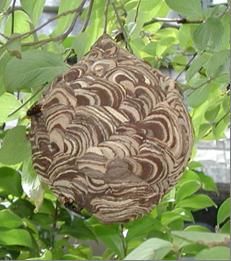 ーー命に、危険な、蜂の巣!に、気をつけてね~!ーー_d0060693_17342373.png
