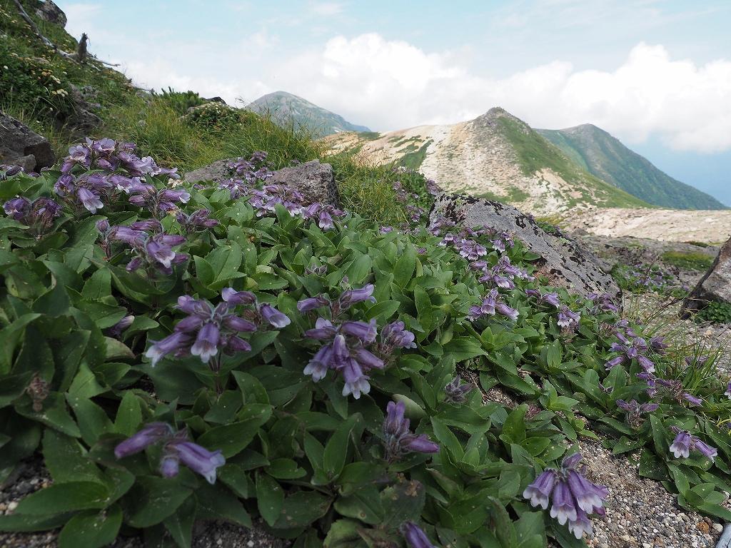 大雪3色登山、8月3日-2度目の緑岳編-_f0138096_11373569.jpg