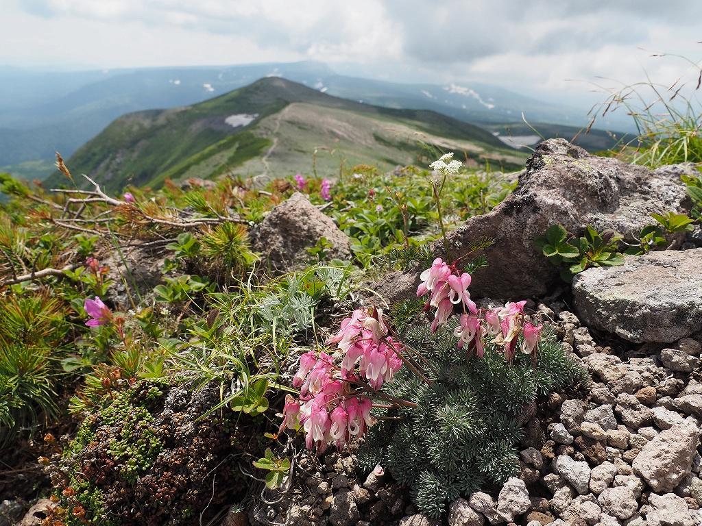 大雪3色登山、8月3日-2度目の緑岳編-_f0138096_11382750.jpg