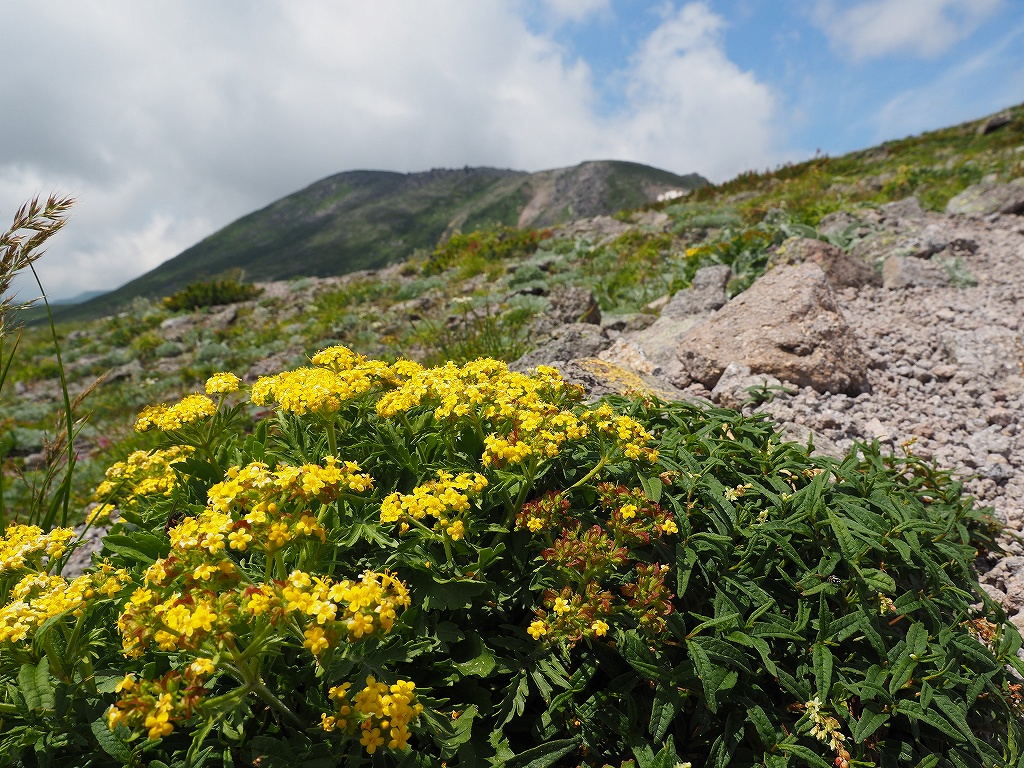大雪3色登山、8月3日-2度目の緑岳編-_f0138096_1138428.jpg