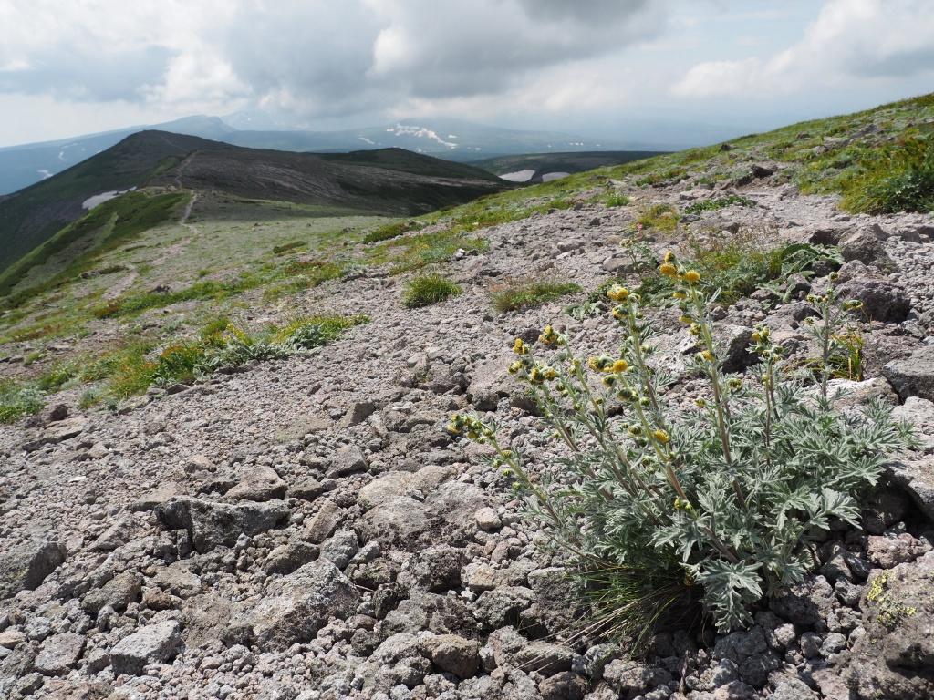 大雪3色登山、8月3日-2度目の緑岳編-_f0138096_11385017.jpg