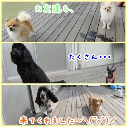 a0338800_23403404.jpg