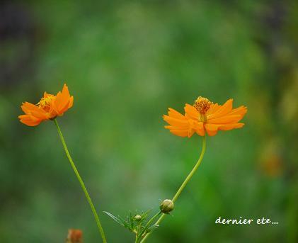 立秋☆ちいさな希望の、風が立つ・・・♪_c0098807_202713100.jpg