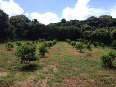 とうがらし栽培とビアガーデン_a0300410_00025173.jpg