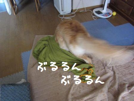 b0008217_11532667.jpg