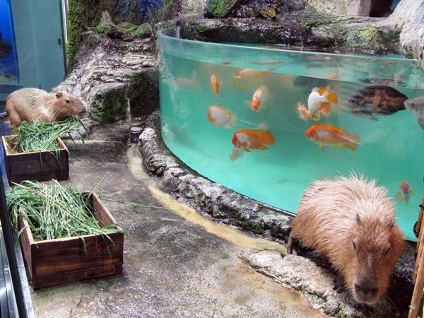 孫たちと水族館へ!_f0129726_23185265.jpg