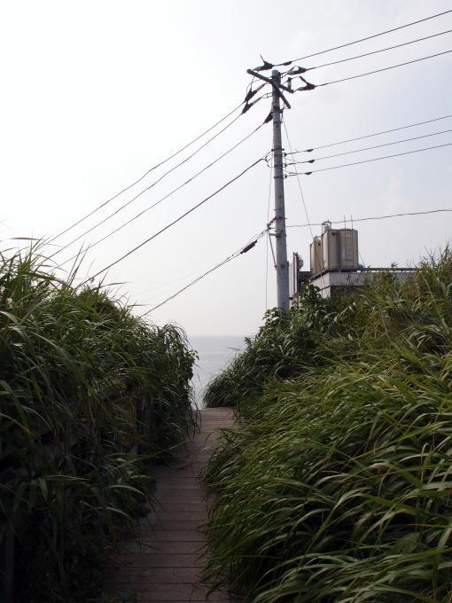 夏景色@城ケ島_a0231828_19514162.jpg