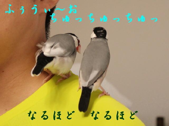 c0365734_22324650.jpg