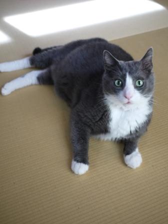 猫のお留守番 カン太くんルノーちゃん編。_a0143140_2082833.jpg