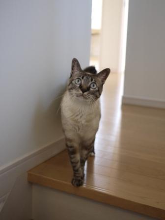 猫のお留守番 カン太くんルノーちゃん編。_a0143140_2083983.jpg