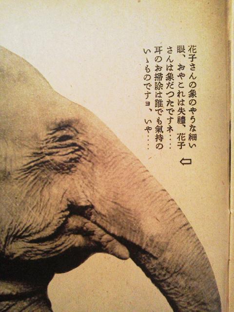 ぞうの花子さん(寫眞週報より)_e0350308_7341136.jpg