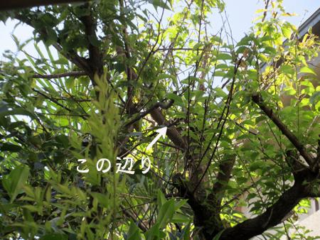 c0211810_10595759.jpg