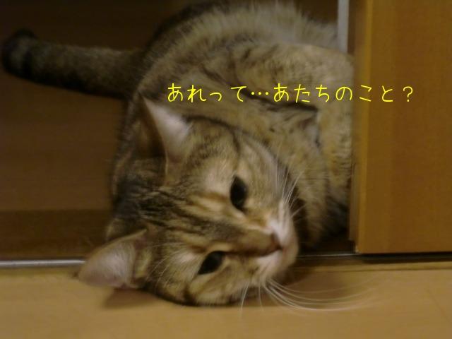 c0259945_13355180.jpg