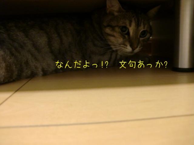 c0259945_14363629.jpg