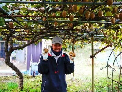 水源キウイ 11月中旬からの収穫に向け、しっかりと手をかけ育てます!キウイフルーツは冬の果物です!_a0254656_1702525.jpg