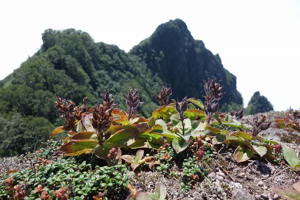 恵庭岳西峰と本峰、8月8日_f0138096_11315867.jpg