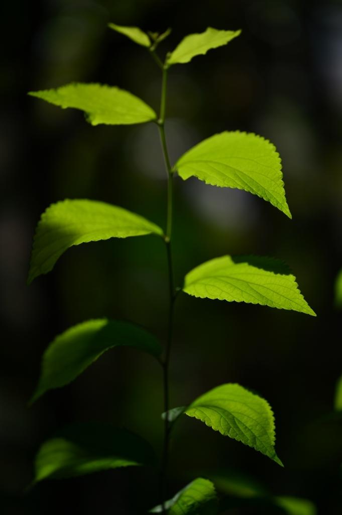庭の光by Nikon Df+Zeiss Otus85mm_f0050534_10103579.jpg