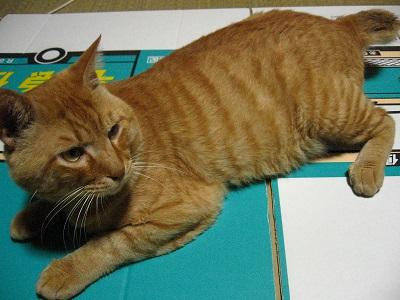 猫のたりくんのしつけ2_f0182936_215447.jpg
