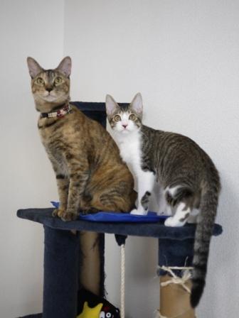 猫のお留守番 KEEちゃんクリボーくん編。_a0143140_23402325.jpg