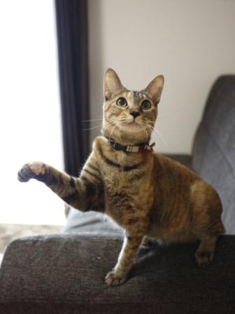 猫のお留守番 KEEちゃんクリボーくん編。_a0143140_23413119.jpg
