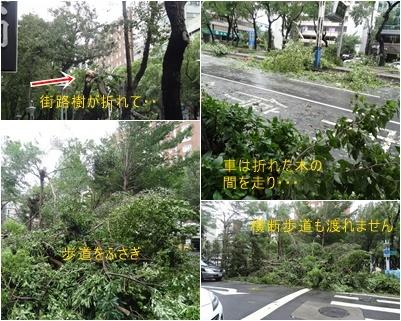 台湾旅行は台風接近のスタートで始まり 最後も台風で大混乱で終わりました_a0084343_17305633.jpg