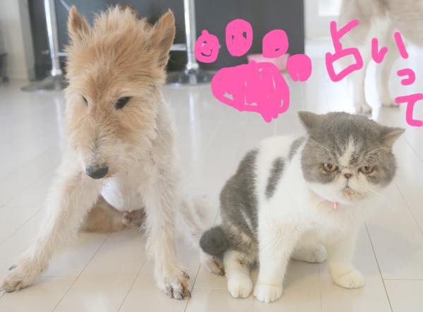 猫の肉球占い♡_c0245679_14214370.jpg