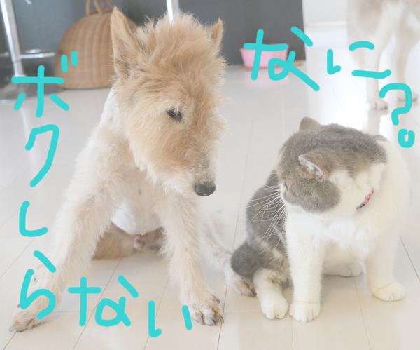 猫の肉球占い♡_c0245679_14251360.jpg