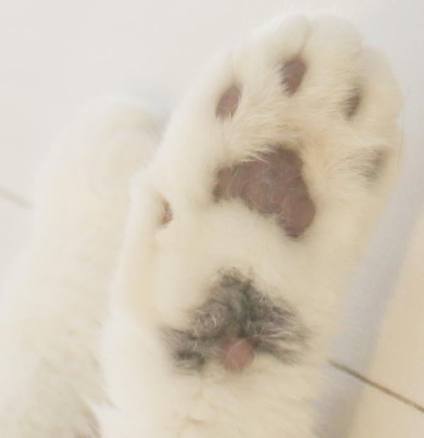 猫の肉球占い♡_c0245679_1440578.jpg