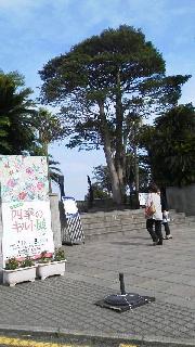 鹿児島・長島美術館_c0161301_10475819.jpg