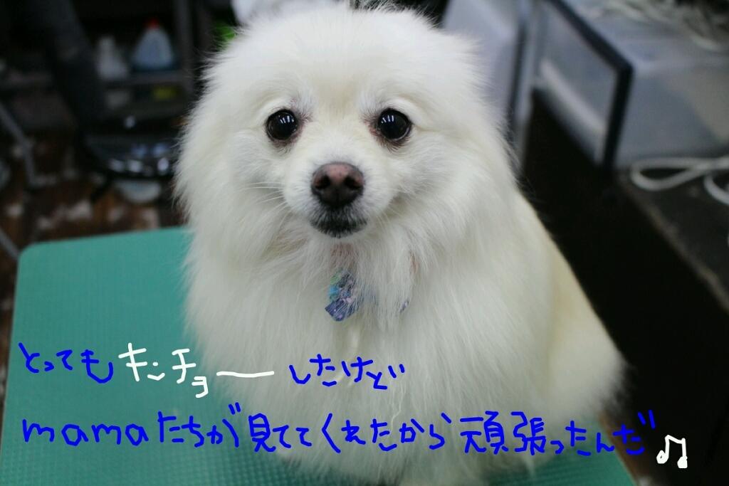 b0130018_20314008.jpg
