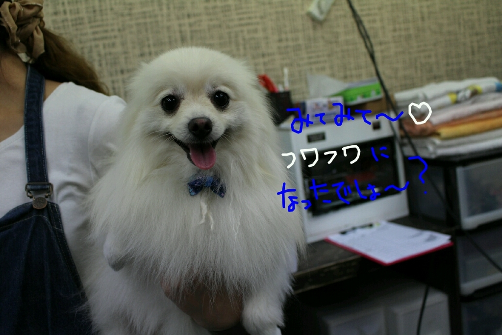 b0130018_20314321.jpg