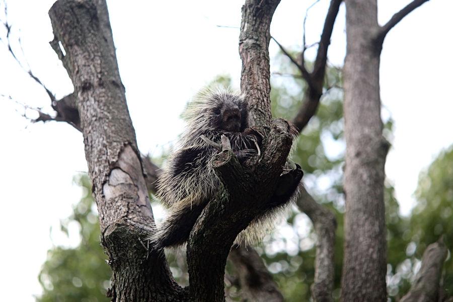 夜の動物園(上野動物園編)_f0224624_9154185.jpg