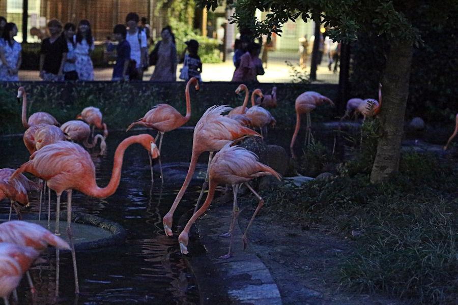 夜の動物園(上野動物園編)_f0224624_9295771.jpg
