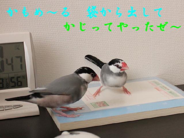 c0365734_22513031.jpg