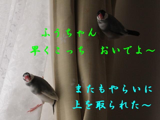 c0365734_22513153.jpg