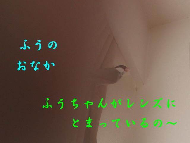 c0365734_22513475.jpg
