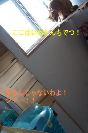 d0013645_10551550.jpg