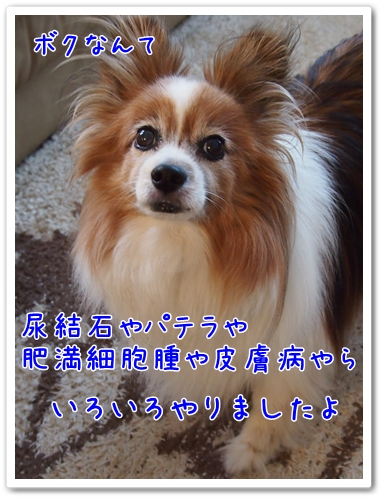 d0013149_22231754.jpg