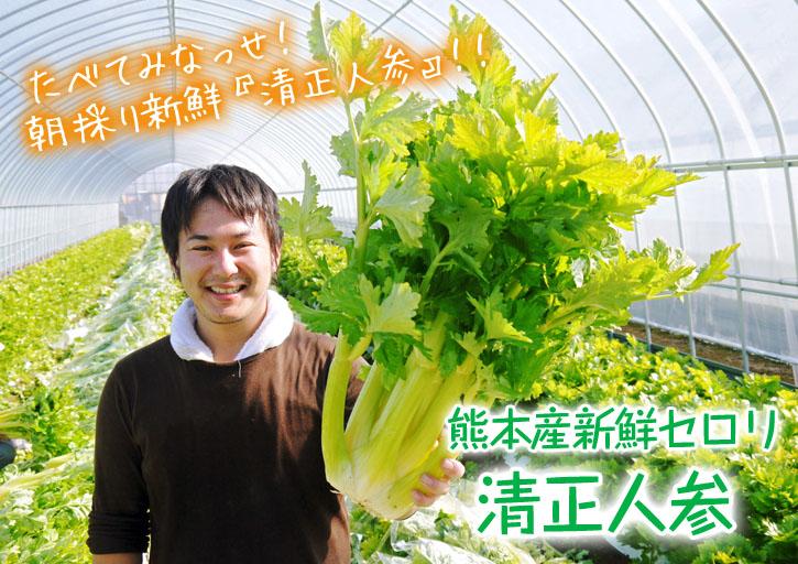 熊本セロリ「清正人参」 9月下旬の定植へ向けて苗床の様子_a0254656_19314622.jpg
