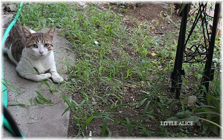 ☆猫と雑草。_c0080132_11162146.jpg