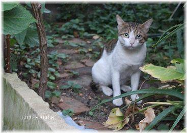 ☆猫と雑草。_c0080132_11193217.jpg