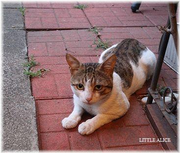 ☆猫と雑草。_c0080132_111950100.jpg