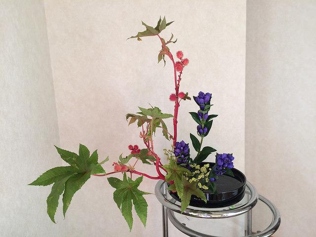 8/11のお花:唐胡麻、りんどう_b0042538_20225658.jpg
