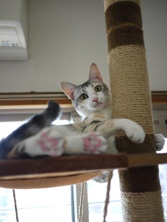 猫のお留守番 はるちゃんソルくん編。_a0143140_19425340.jpg