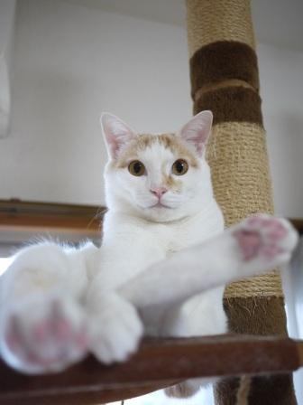 猫のお留守番 はるちゃんソルくん編。_a0143140_19463133.jpg