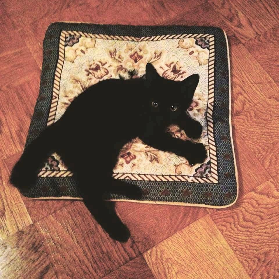 黒猫がやってきた。。。_a0229658_10573115.jpg
